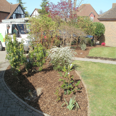 Newly weeded bed and freshly cut lawn